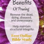purple flowers, Benefits of pruning/free online Bible study